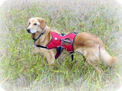 Dog Boarding Elmira Ny